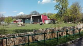 ZOO nosorożec