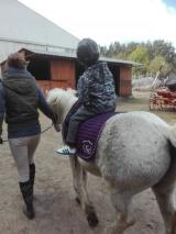 zajęcia hipoterapia pierwsza jazda konna