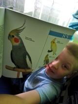 """Atlas ptaków egoztycznych. """"Mamo popatrz... KUBA :) """""""