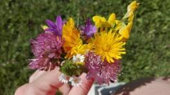 Kwiaty zebrane z podhalańskich łąk :-) Parę lat temu